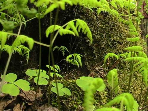 Фотоальбом природа словно пещера